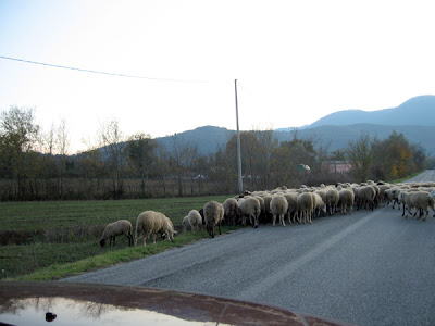 The flock starts across