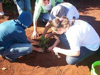 Aprendiz Rural - Viradouro - Plantio da árvore solitária