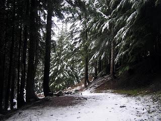 Nude Hiking and Soaking in the Pacific Northwest: Umpqua