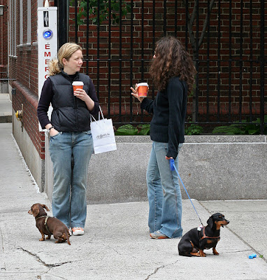 New York ?Dachshunds