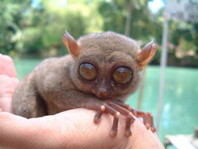 2/10 animales más feos del mundo...