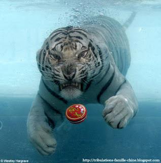 baume du tigre eau
