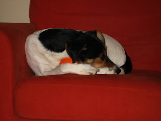 Sadie napping with her toy version 2
