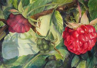Progress photo painting of raspberries by Angela Fehr