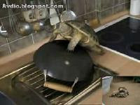 turtle humps a wok
