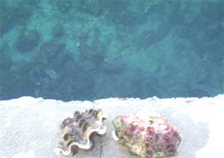 bagacay sea clam