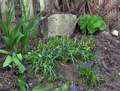 Blue flowers called????