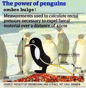 Pressures Produced When Penguins Poo -- Calculations on Avian Defecation,  If they die on a rare spot of iceless land, they don't decay but dry out, get covered with other penguins' excrements and, What color is penguin poop [?] www.GOOGLE.de: ombre bulge