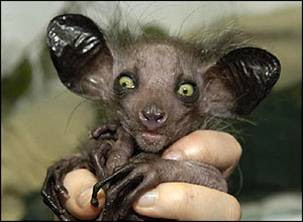 3/10  animales más feos del mundo...