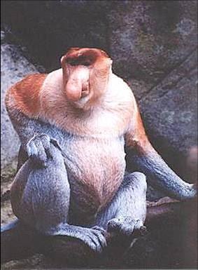 4/10 animales más feos del mundo...