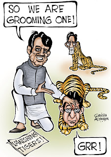 The Congress has been playing off Shiv Sena and MNS against each other. Nett, nett - it keeps the BJP out of power in Maharashtra. (cartoon by Satish acharya; courtesy - cartoonistsatish.blogspot.com). Click for larger image.