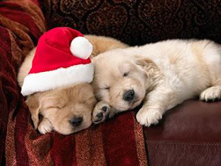 Dog Christmas Meme.The Myth Of Christmas Puppies