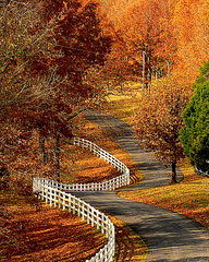 Winding road with fall leaves