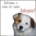 banner  adopta-i.blogspot.com