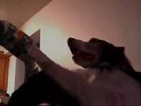 狗狗也能玩 Wii 網球! 而且還贏了