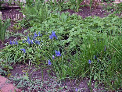 More blue flowers called????