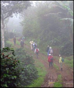 Cloud forest Walking_shade coffee plantation_Nicaragua-2