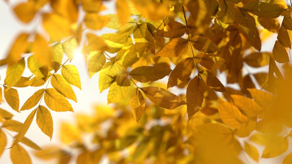 blender_vegetation_tree_blender