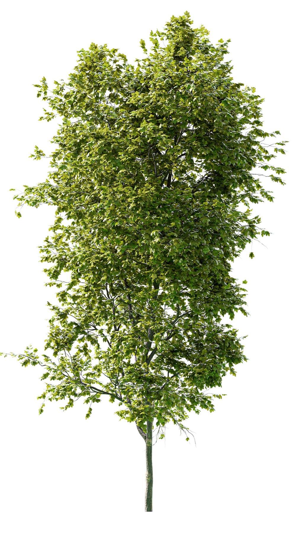 vegetation_blender_tree