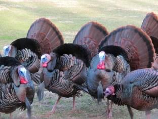 turkey gang 2014 1