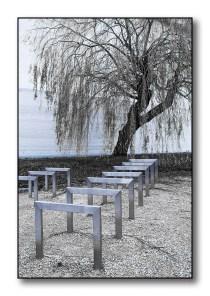 een boom in het park