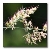 mini-bloempjes