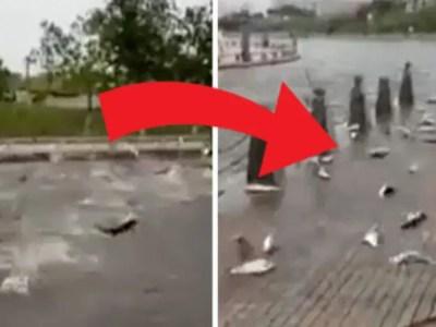 魚が集団自殺する意外すぎる原因は