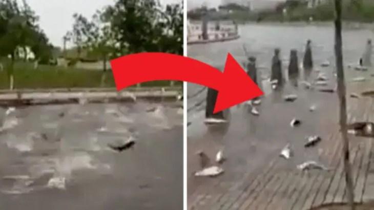 怪奇現象…中国で大量の魚が池から飛び出し集団自殺!その原因は…