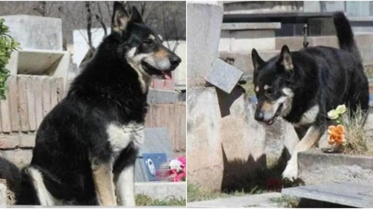 【感動】南米の忠犬ハチ公!亡き主人の墓に10年寄り添うシェパード