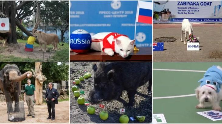 「エスパー動物」のワールドカップ2018勝敗予想まとめ!大胆予言で優勝的中