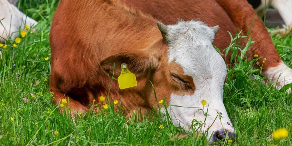 家畜の連続怪死事件は太陽光発電が原因なのか