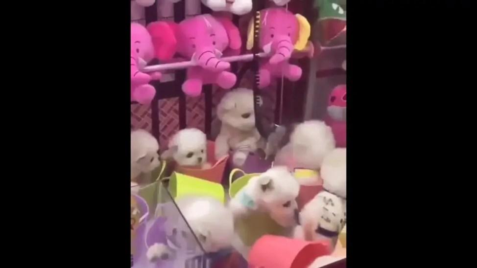動物虐待疑惑の生きた子犬UFOキャッチャー
