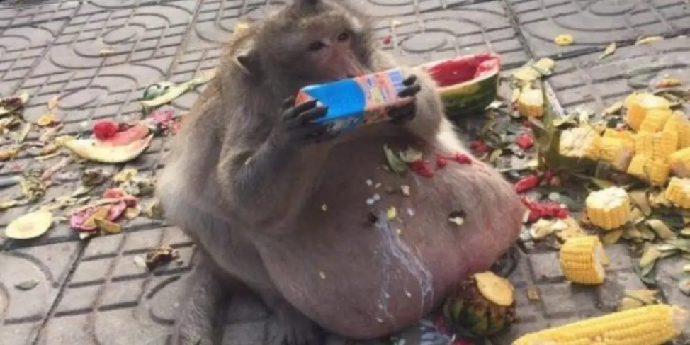 世界一の肥満猿太ったおっさん失踪事件