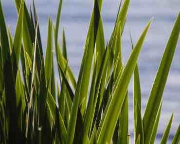 plantas que fazem bem ao cabelo