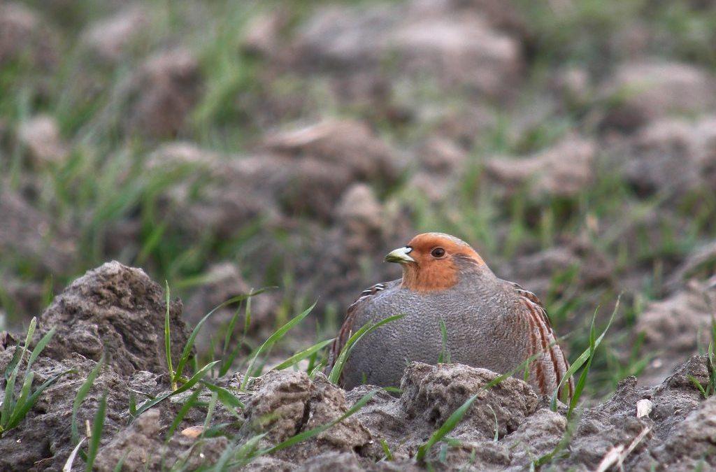 Journée mondiale des espèces menacées – Le Bw aussi est concerné!