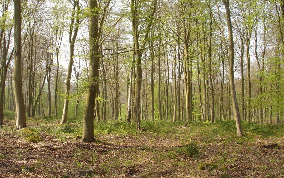 Une privatisation des forêts inacceptable !