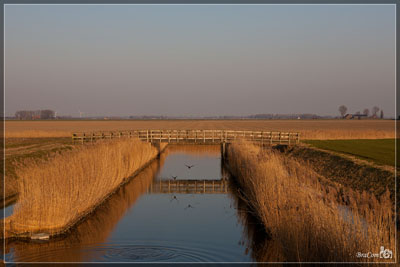 Riet / Reed