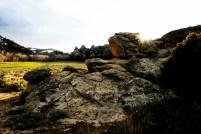 Stone in Meadow