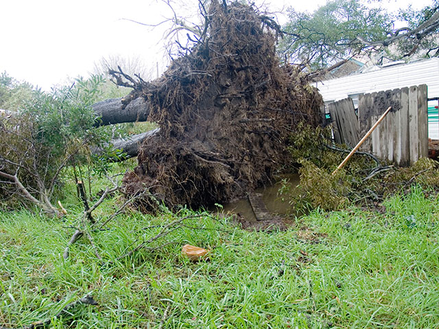 fallen-tree_1-27-08