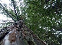 tree2_1-10-08