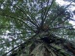 tree4_1-10-08