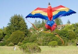 macaw-kite_4-20-08