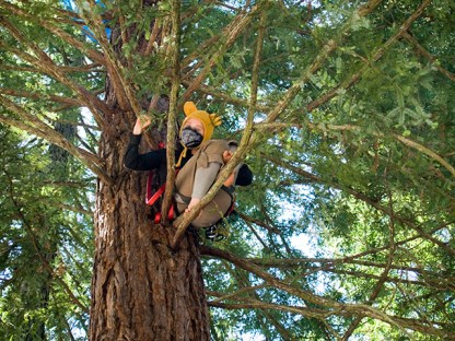 200 Days of Tree-Sitting Resistance