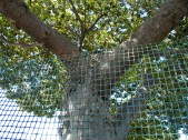 fenced-tree_9-24-08