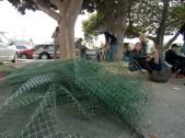 mesh-fencing_10-1-08