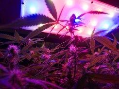 led-grow-lights_4-17-10