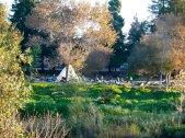 san-lorenzo-river_2_12-8-11