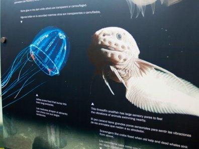 Threadfin Snailfish