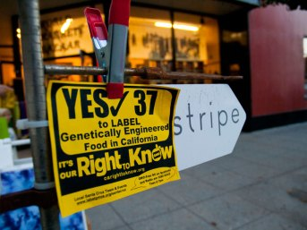 label-gmos-yes-prop-37_12_8-24-12