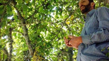 santa-cruz-fruit-tree-project_6_8-26-12
